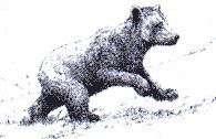 Encontrado otro oso muerto en el Pirineo.